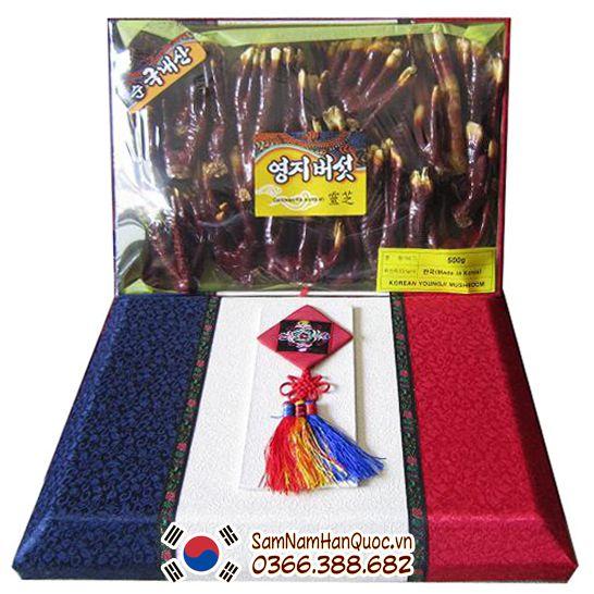 Sâm Nấm Hàn Quốc bán nấm linh chi sừng hươu