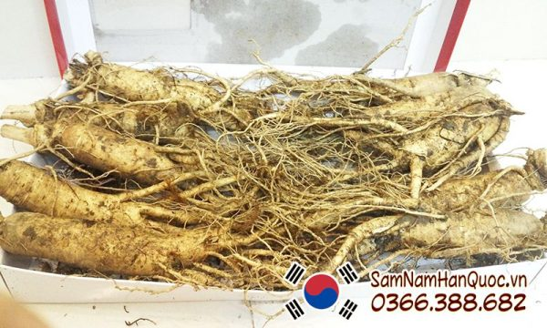 Sâm tươi 5 củ 0.5kg | Nhân sâm tươi Hàn Quốc 5 củ 1/2kg