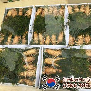 Nhân sâm tươi Hàn Quốc 9 10 củ 1kg 6 năm tuổi giá rẻ