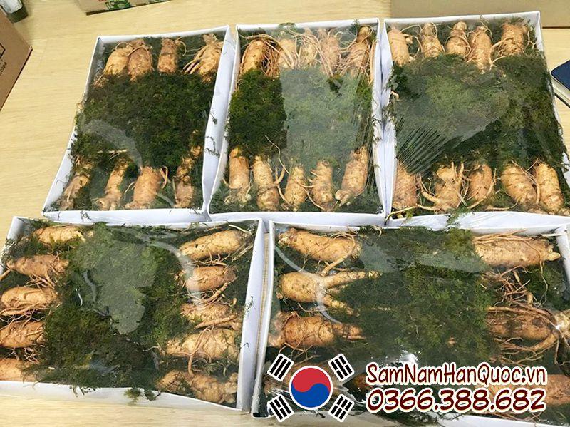 Sâm tươi 5 củ 1/2kg Hàn Quốc