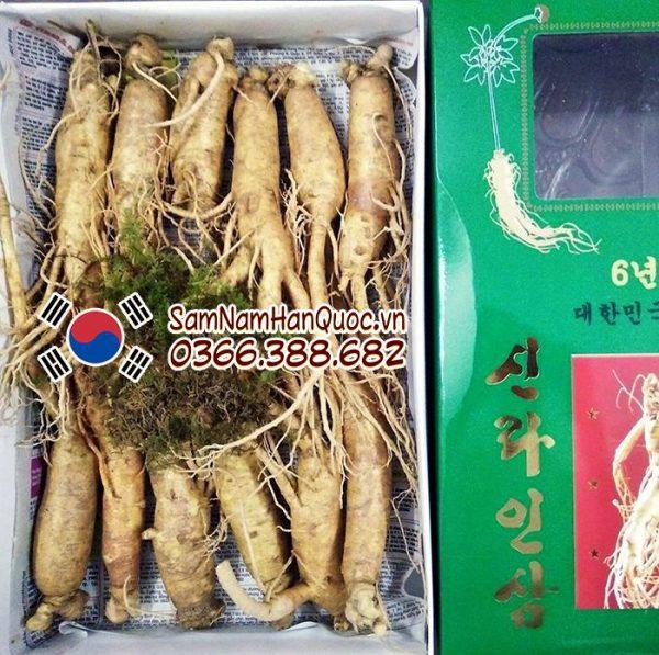 Nhân sâm tươi Hàn Quốc 11 12 củ 1kg 6 năm tuổi giá rẻ
