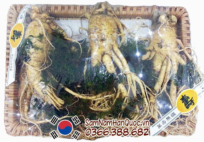 Có thể mua sâm tươi Hàn Quốc tại cửa hàng Sâm Nấm Hàn Quốc để đảm bảo hàng chính hãng 100%