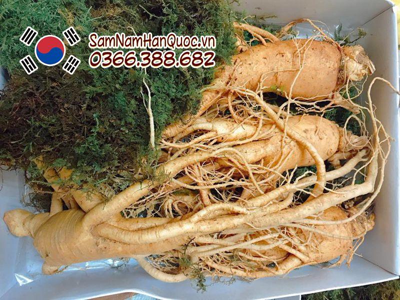 sâm tươi Hàn Quốc 4 củ 1kg tại Hồ Chí Minh