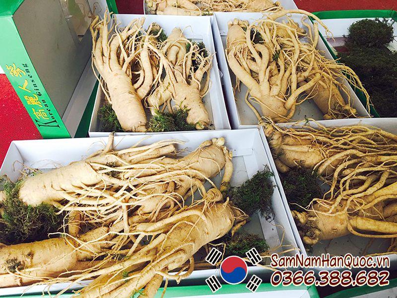 Địa chỉ mua nhân sâm tươi Hàn Quốc 4 củ 1kg