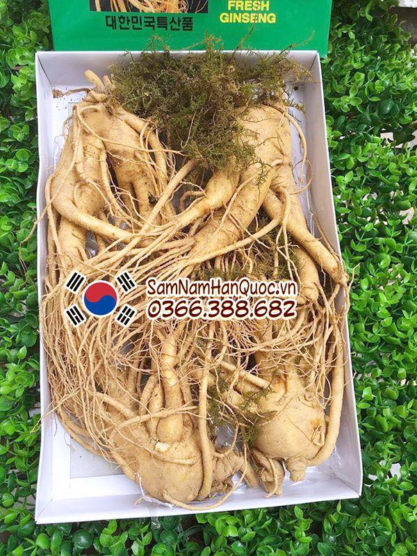 Nhân sâm tươi Hàn Quốc 4 củ 1Kg 6 năm tuổi chính hãng giá rẻ