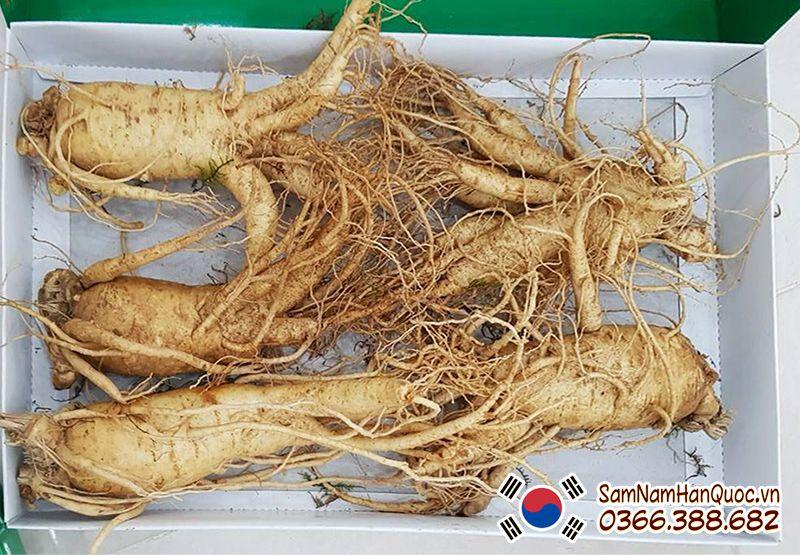 nhân sâm Hàn Quốc 5 củ 1 ký
