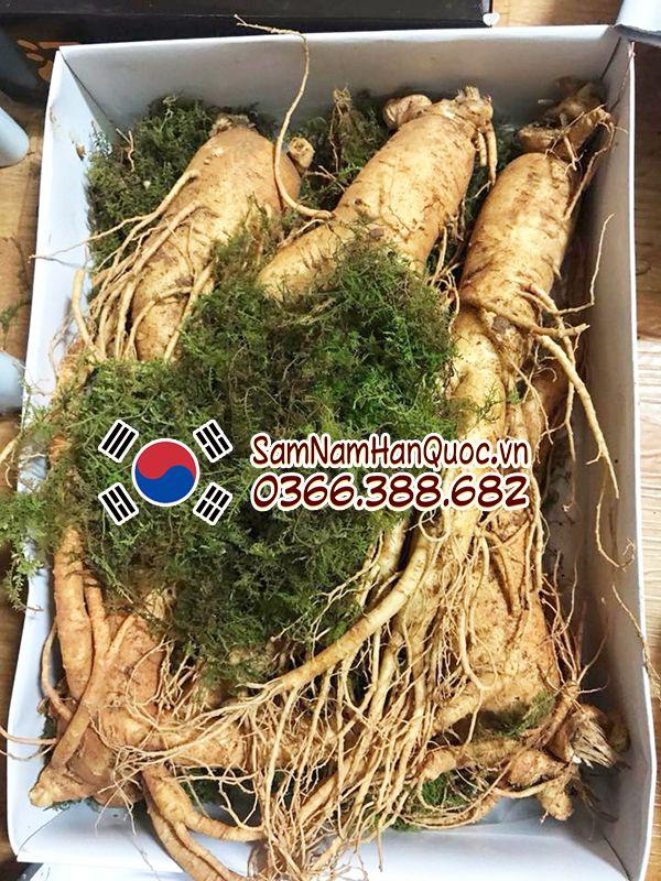 Địa chỉ bán sâm tươi Hàn Quốc 5 củ 1kg tại Hà Nội