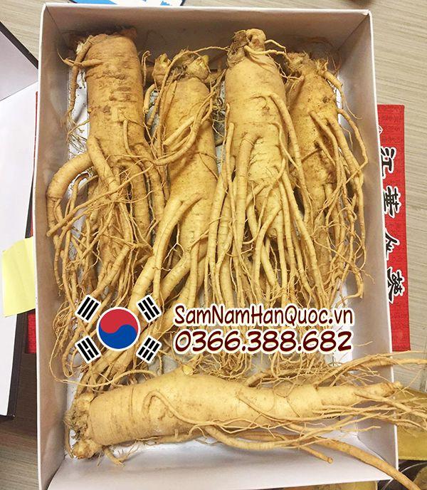Địa chỉ mua sâm tươi Hàn Quốc 5 củ 1kg tại Hà Nội