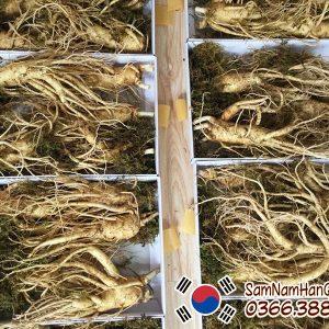 Nhân sâm tươi Hàn Quốc 5 củ 1kg 6 năm tuổi chính hãng giá rẻ