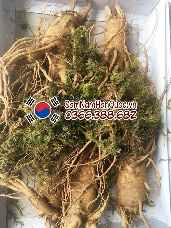 Nhân sâm tươi Hàn Quốc 5 củ 1kg