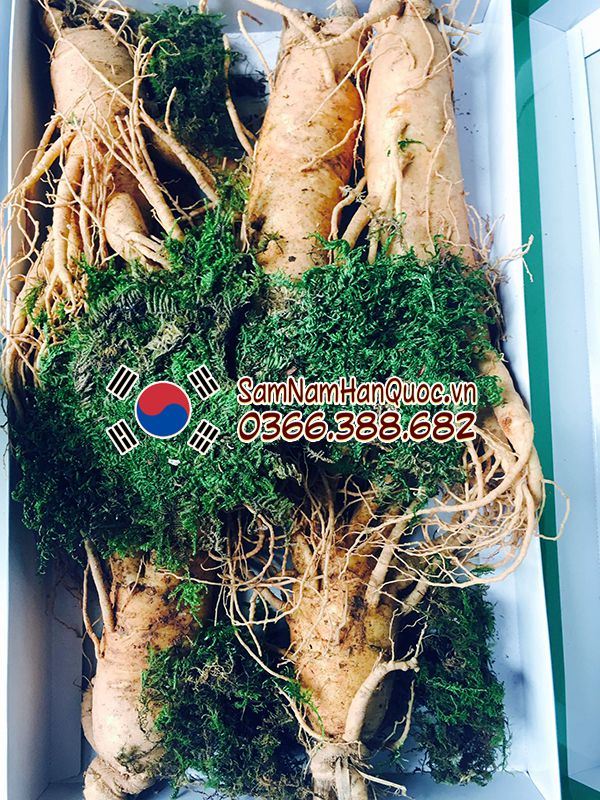 Địa chỉ mua sâm tươi Hàn Quốc 5 củ 1kg tại TP Hồ Chí Minh