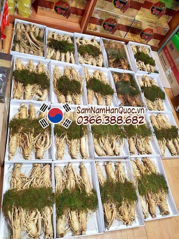 Sâm tươi chính hãng Hàn Quốc loại 3 củ 1/2kg