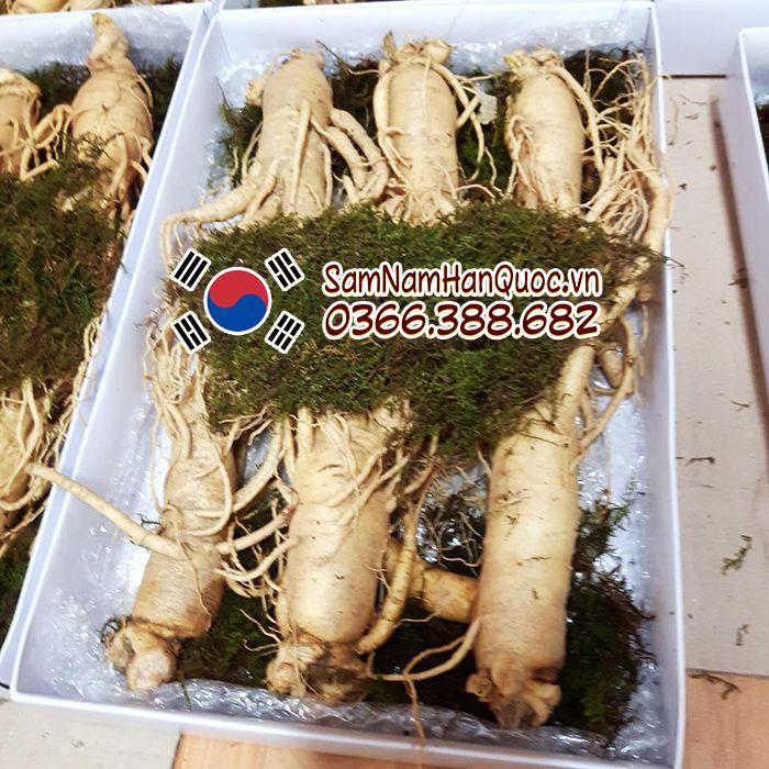 Sâm tươi Hàn Quốc loại 3 củ 1/2kg