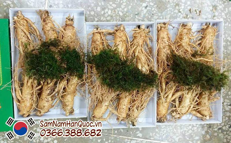 Địa chỉ mua sâm tươi Hàn Quốc 6 củ 1kg tại Hồ Chí Minh