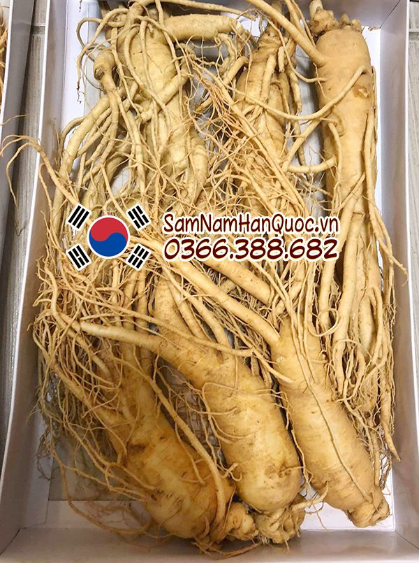 Sâm Hàn Quốc tươi 3 củ 1/2kg nhập khẩu