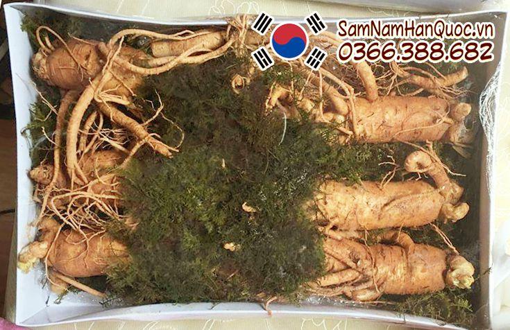 Nhân sâm tươi Hàn Quốc 3 củ nửa kg