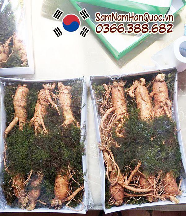 Nhân sâm tươi Hàn Quốc 3 củ nửa cân