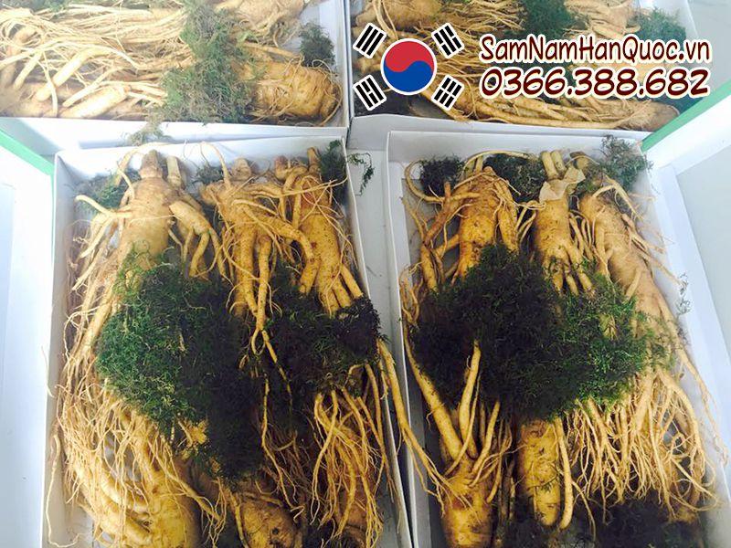 Nhân sâm tươi Hàn Quốc 6 củ 1kg