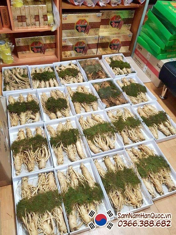Nhân sâm tươi Hàn Quốc 6 củ 1kg 6 năm tuổi chính hãng giá rẻ