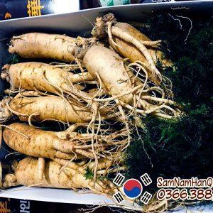 Nhân sâm tươi Hàn Quốc 7 củ 1kg 6 năm tuổi chính hãng giá rẻ