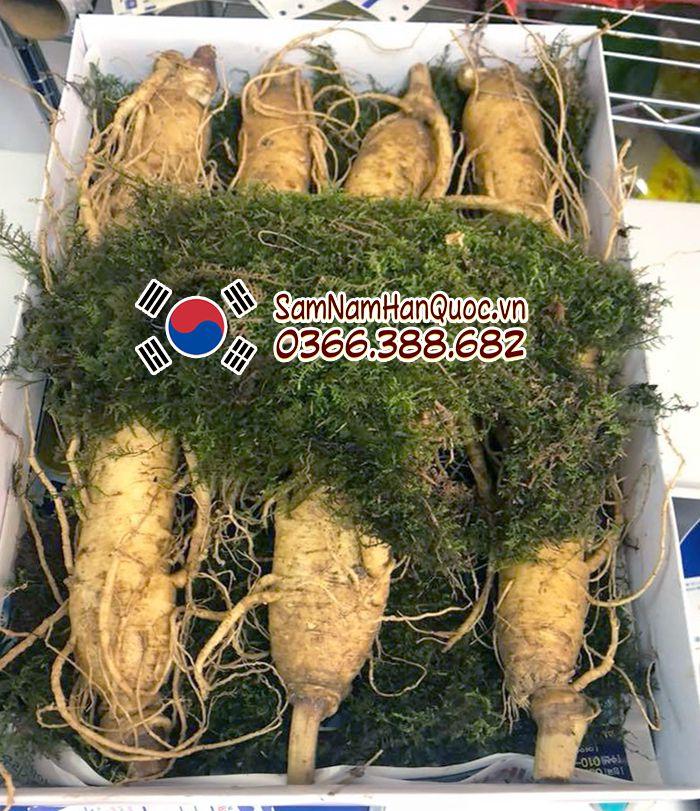 Bán Nhân Sâm Tươi Hàn Quốc 7 Củ 1Kg chính hãng