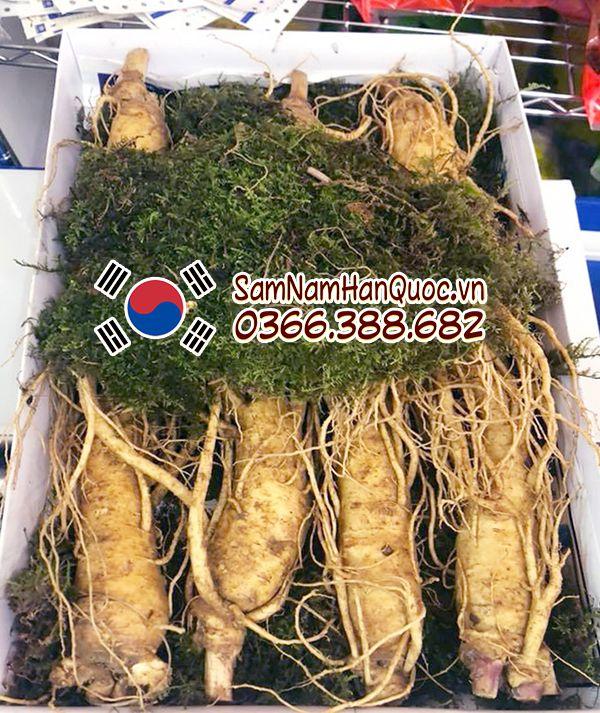 tác dụng của nhân sâm tươi Hàn Quốc 7 củ 1kg