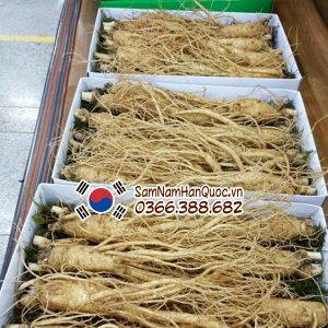 Sâm tươi 4 củ 0.5kg | Nhân sâm tươi Hàn Quốc 4 củ 1/2kg