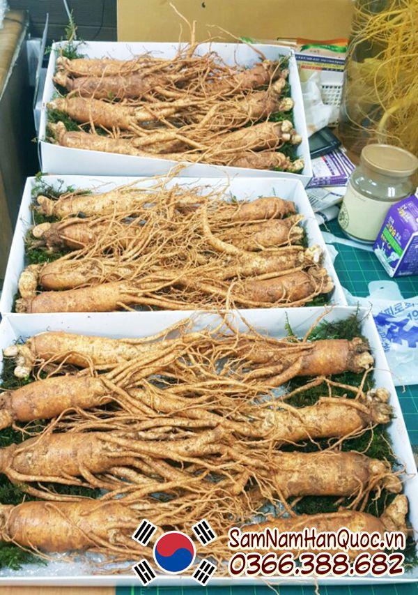 sâm tươi hàn quốc 8 củ 1kg tại TP Hồ Chí Minh