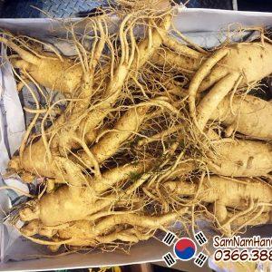 Nhân sâm tươi Hàn Quốc 8 củ 1kg 6 năm tuổi chính hãng giá rẻ