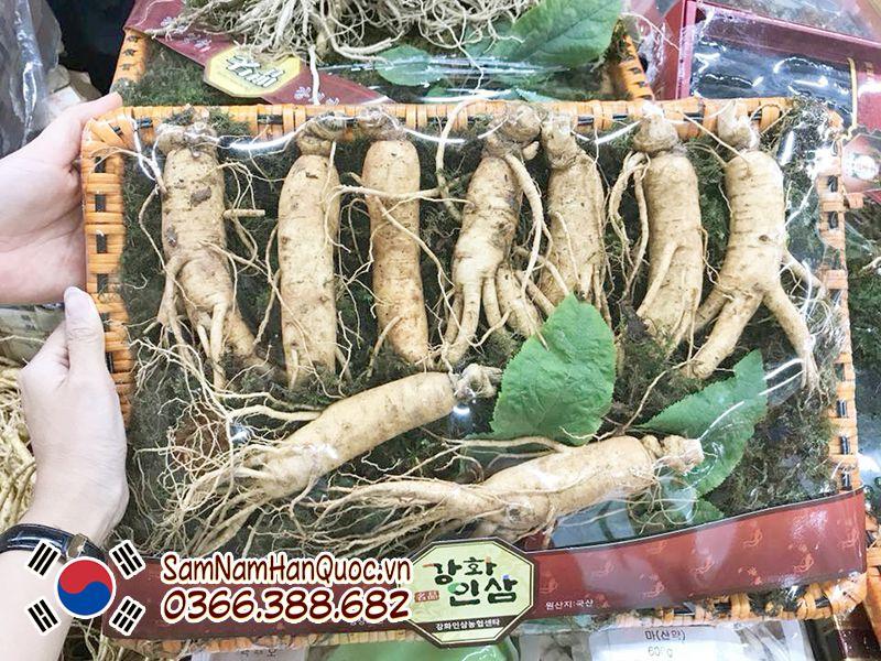 cách sử dụng sâm tươi Hàn Quốc 9 - 10 củ 1kg
