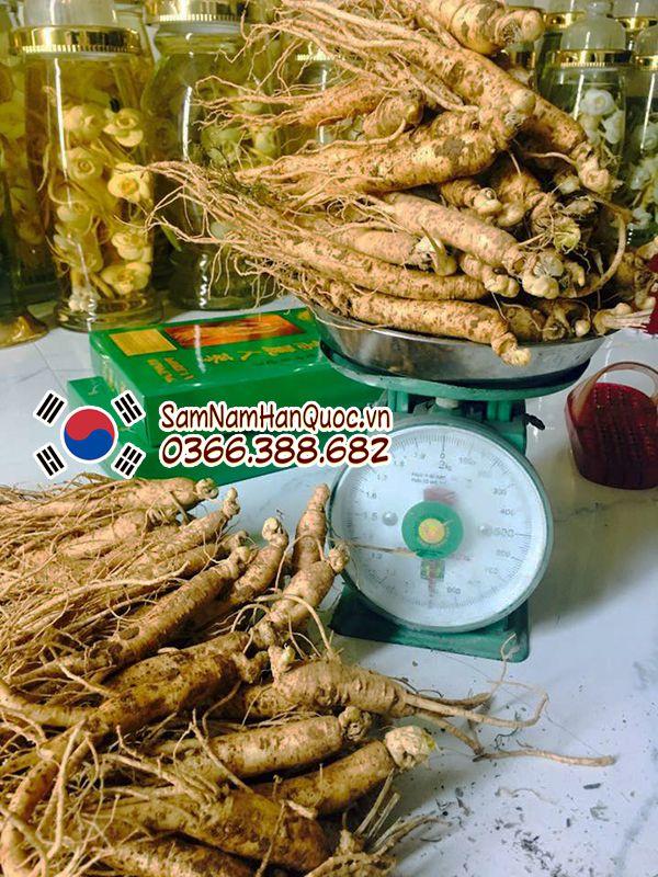 Nhân sâm tươi Hàn Quốc nhập khẩu loại 15 củ 1kg