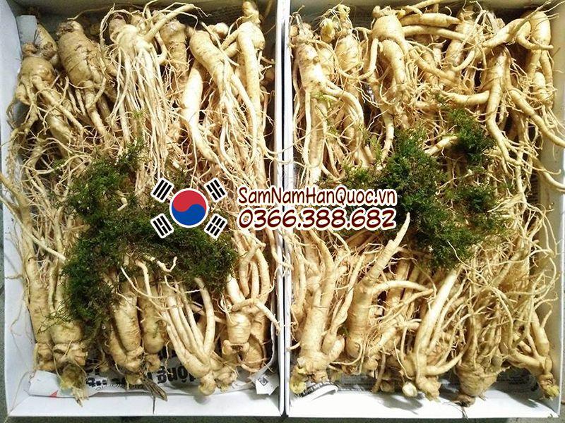 Nhân sâm Hàn Quốc tươi 15 củ 1 ký