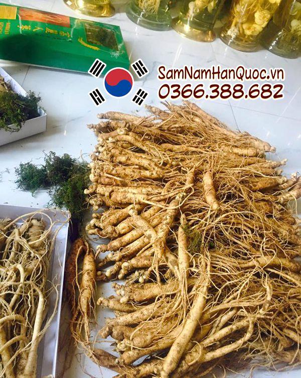 Bán nhân sâm tươi Hàn Quốc 15 củ 1kg chất lượng