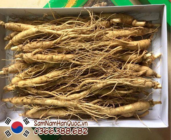 Nhân sâm tươi Hàn Quốc 15 củ 1kg 6 năm tuổi giá rẻ