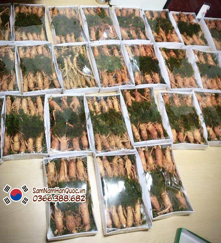 Địa chỉ bán Nhân sâm tươi Hàn Quốc loại 11 - 12 củ 1Kg