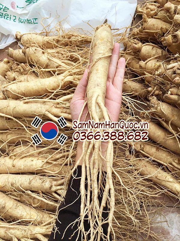 Nhân sâm tươi Hàn Quốc 15 củ/kg chất lượng