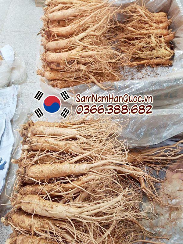 Nhân sâm tươi nhập khẩu Hàn Quốc 11 - 12 củ 1Kg