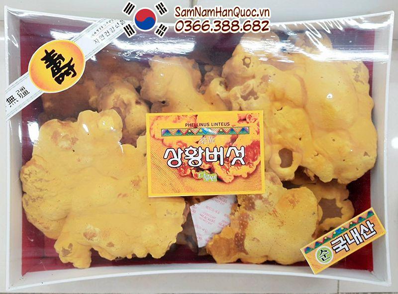 Nấm thượng hoàng Hàn Quốc giá bao nhiêu 1 kg