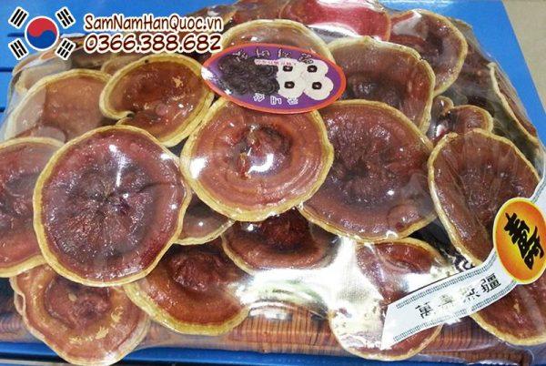 Khay nấm linh chi bào tử nguyên tai chính hãng Hàn Quốc