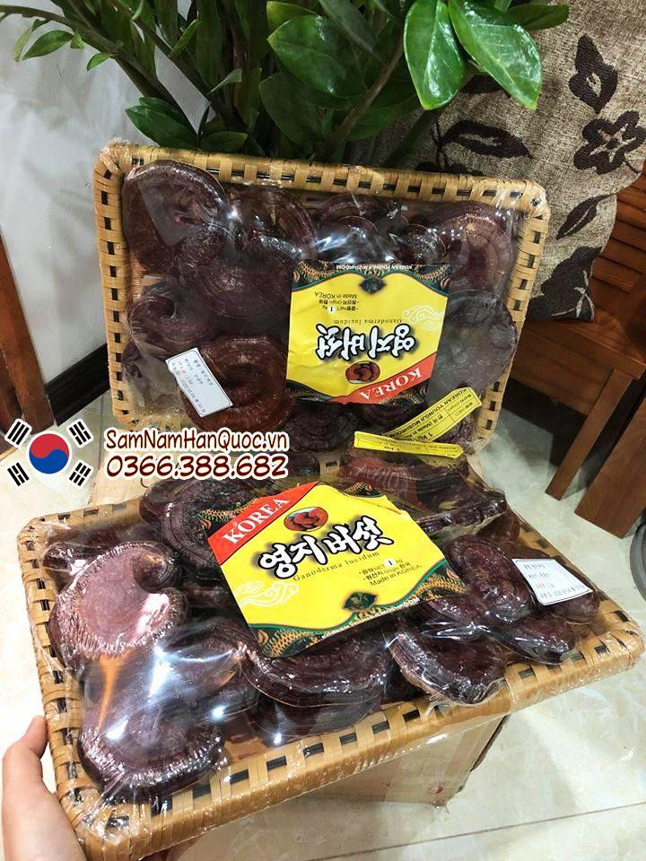 Công dụng của nấm linh chi đỏ Hàn Quốc là gì? Những lưu ý khi sử dụng