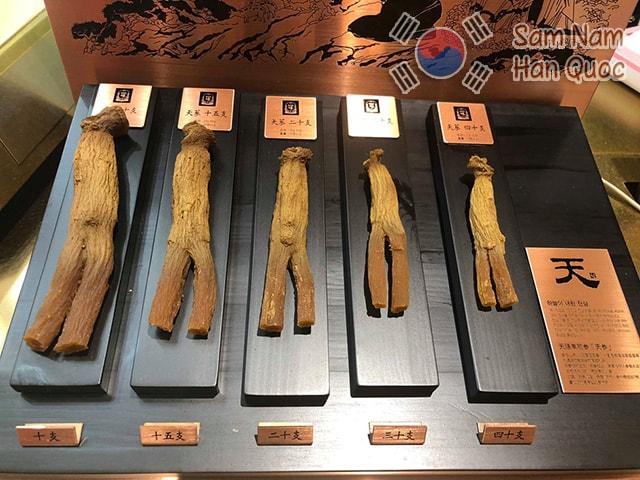 Cách dùng Thiên sâm Hàn Quốc