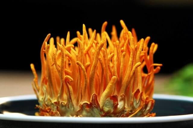 Đặc điểm của đông trùng hạ thảo Việt Nam