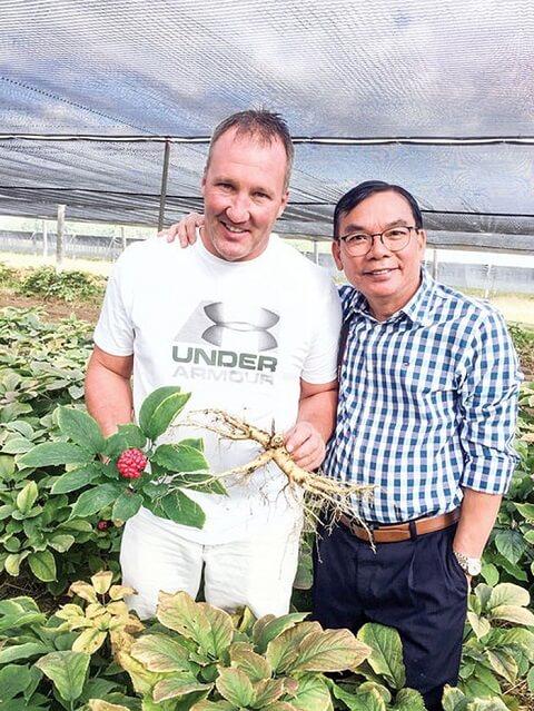 Quy trình trồng và thu hoạch nhân sâm Hoa Kỳ