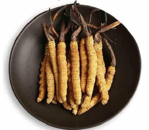 Bảo quản đông trùng hạ thảo khô