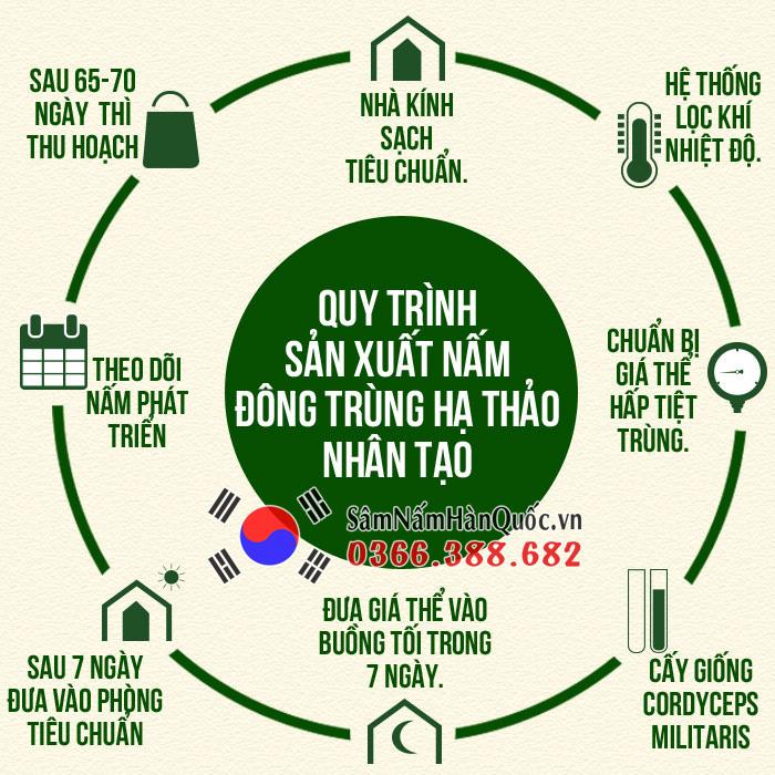 Đông trùng hạ thảo được nuôi thành công ở Việt Nam